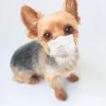 マスクつけた犬